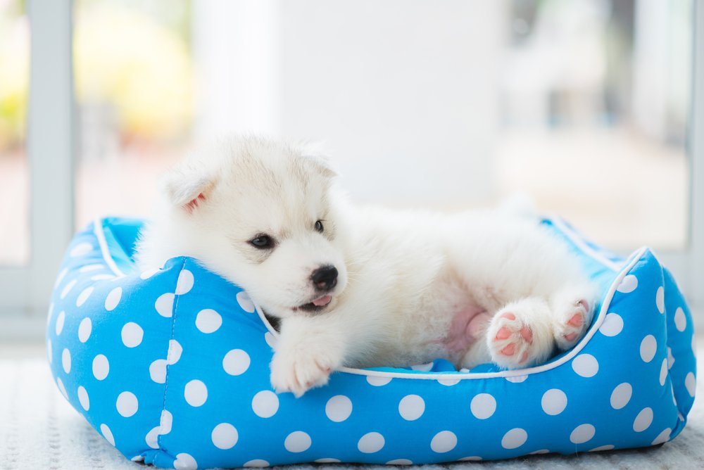 Here Are Steps And Tips On How To Wash Pillow Pets